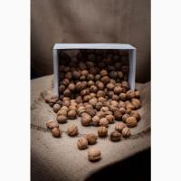 Закупаем грецкий орех в скорлупе по всей Украине