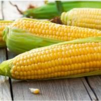 Куплю проблемную кукурузу
