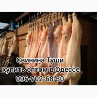 Туши свинины цена