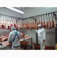 Свинина оптом цена