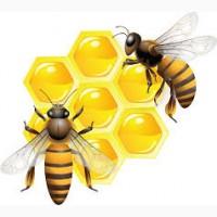 Куплю мед оптом (Кривой Рог)