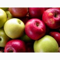 Закуповуємо яблука
