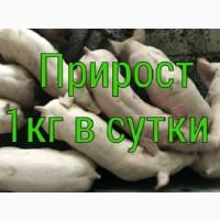 Поросята PIC, DanBred купить со свинокомплекса