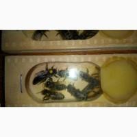 Пропоную бджоломатки і бджолопакети