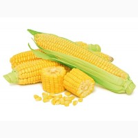 Закуповуємо кукурудзу в Україні