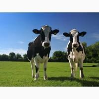 Закупка яловичини