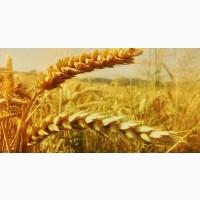 Закупівля зернових. Зернові куплю