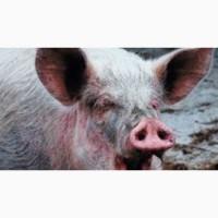Мясо свинины Одесса заказать с доставкой
