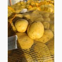 Продам картофель сетевого качества