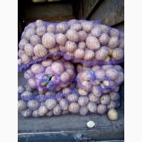 Картошка Гранада, Мелоди, высшего качества, Опт от 20тн, есть экспорт, со склада