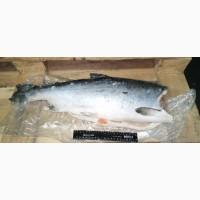 Рыба Кижуч 2, 7-4, 1 кг Премиальный