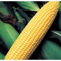 Семена кукурузы ДКС 3623 ФАО 290