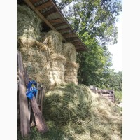 Продам сено урожая 2019