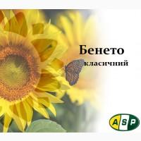 Подсолнечник Бенето (А-F), Майсадур Семенс
