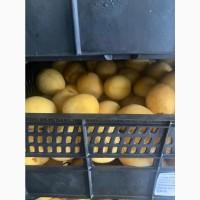 Продам абрикос ананаска