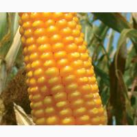 Кукурудза на зерно ЛГ 3258 (LG 32.58)