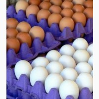 Яйцо куриное на экспорт