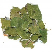 Куплю оптом лист малины
