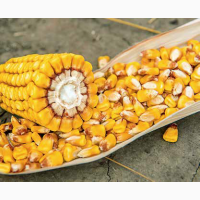 Кукурудза на зерно ЛГ 30315 (LG 30.315)