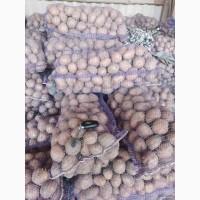 Продаём товарный картофель оптом!!!Урожай 2020 года