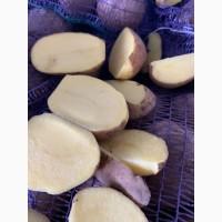 ПРОДАМ Продовольственную и Семенную картошку Сорта Сорая, Барвина, Джилли, Галла и другие