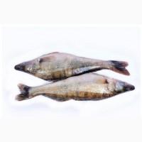Риба опт. Свіжоморожена, в#039; ялена, риба х/к