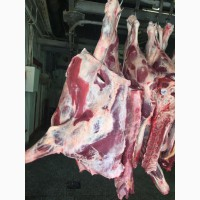 Продам говядину коров быков Полутуши, кусок, блочка