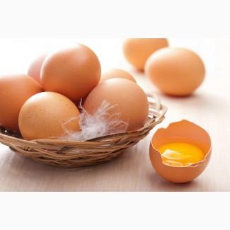 Яйца куриные купить Днепр
