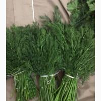 Продам кріп зелений