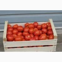 Оптовая продажа помидоров реализуем по всей территории Украины доставка в любой регион