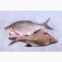 Рыба опт. Свежемороженая, вяленая, рыба х/к