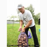 Продам картофель молодой