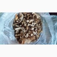 Продам гриби білі