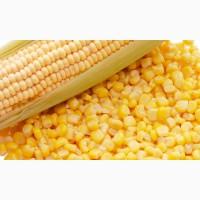 Продам кукурудзу, ячмінь, пшеницю