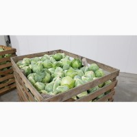Производитель прелагает овощи оптом Рахов