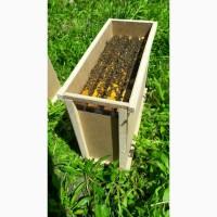 Пчелопакеты на 2020 год Доставка в Херсон пчелы Apis mellifera 4+1