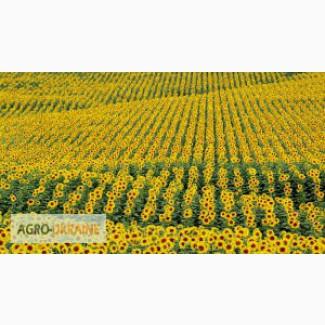ТОВ Апріорі- Д на постійній основі закуповує соняшник кондитерських сортів