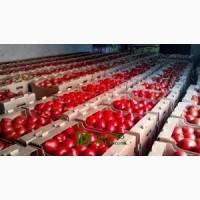 Реализуем помидор опт