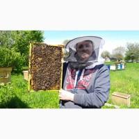 Продаємо бджолопакети карпатка вучковск. тип 2020 Доставимо Вам додому