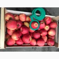 Яблоко сортовое